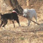 Elsa-and-Charlie-share-a-big-stick-150x150