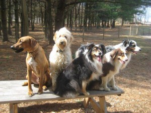 dogs_at_farm-300x225